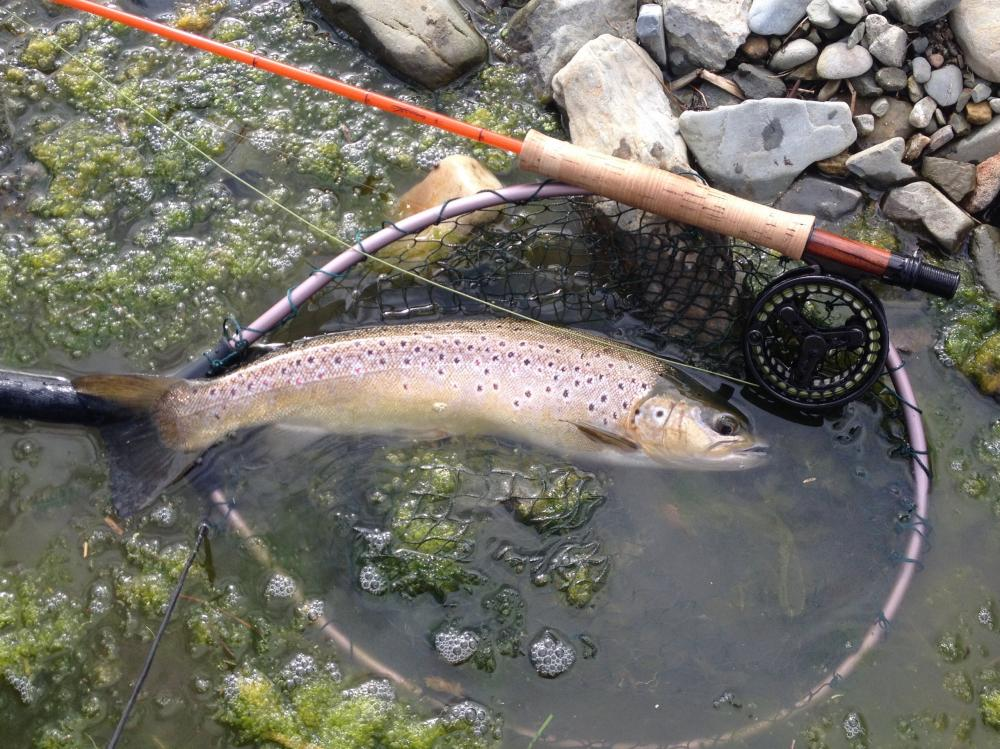Fishing The Fly Forum Epic