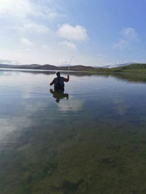 playing fish