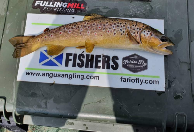 Brown from Lintrathen