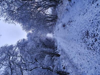 Winter Stalk