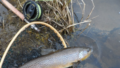 First trophy brown 2013