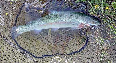 Lochter Fishery June 2021