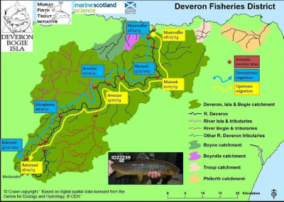 River Deveron Trout Study
