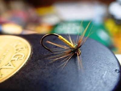 Greenwells Spider