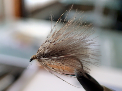 Hares Ear CDC Spider
