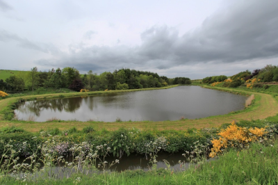 Mill Of Elrick Trout Fishery
