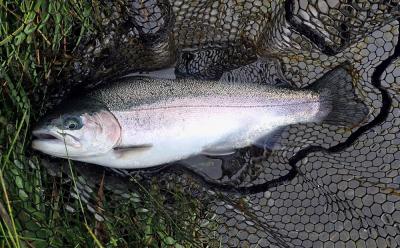 Lochter Fishery 21.08.2021