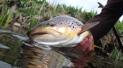 Cracking River Don Brownie from Sandy