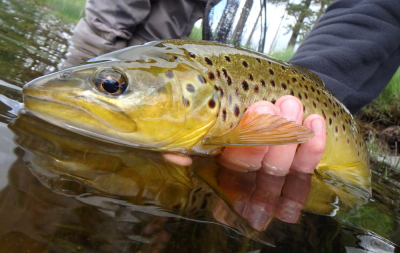 Tinto Trout Fishery Brownie from Sandy