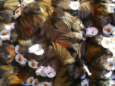 Gallos De Leon Feathers ( Coq de Leon )