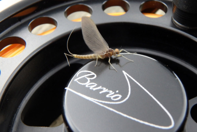 Reel fly from Sandy