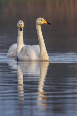 Lochter Report- Swanning Around at Lochter