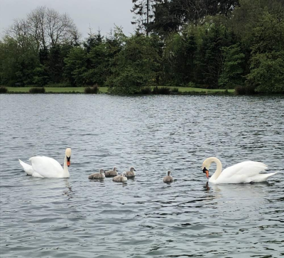 Lochter Report - Swanning About at Lochter