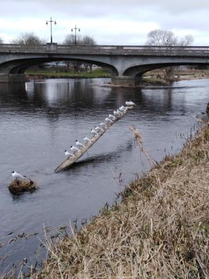 Inverurie Bridge