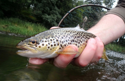 Nice August Don Trout from Sandy