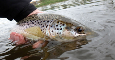 April River Don Trout From Sandy