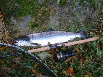 My first salmon